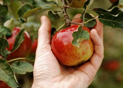 eden marketingsysteem, appelpluk